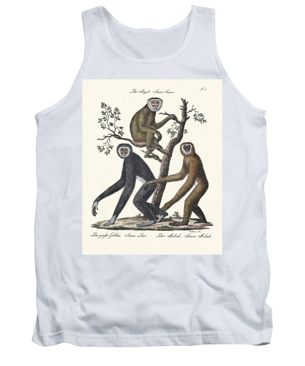 Der Magot Tank Top featuring the drawing The Great Gibbon by Splendid Art Prints