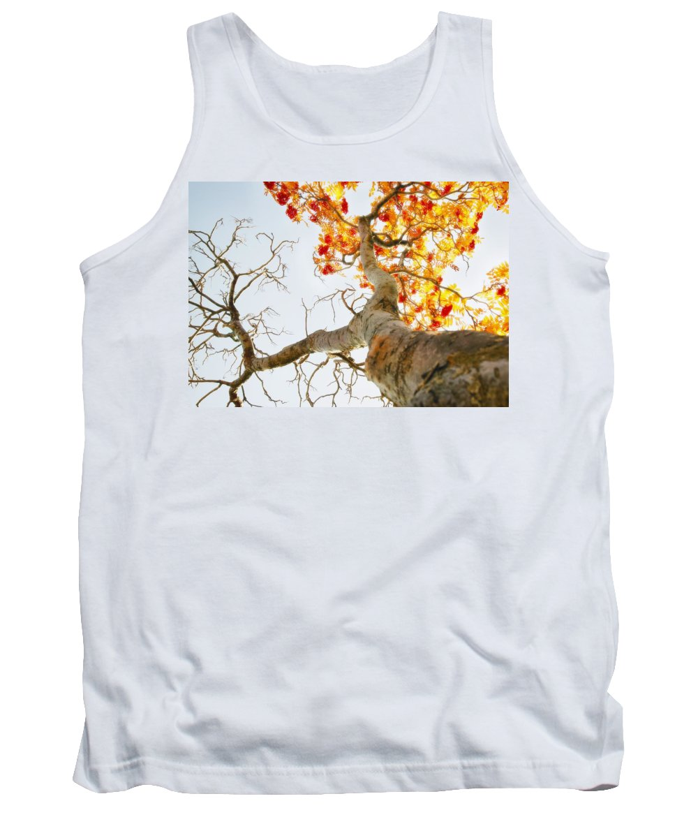 Autumn Colors Tank Top featuring the photograph Tree With Half Of The Leaves Missing by Don Hammond