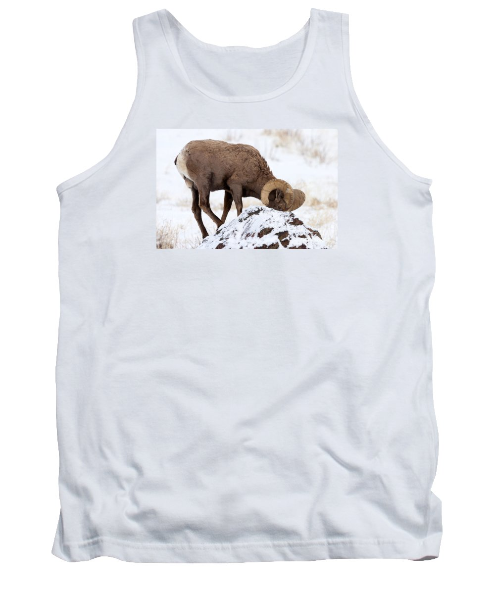 Bighorn Tank Top featuring the photograph Watchful Eye by Mike Dawson