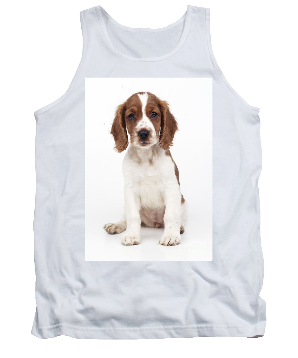 Welsh Springer Spaniel Tank Top featuring the photograph Welsh Springer Spaniel Dog by John Daniels