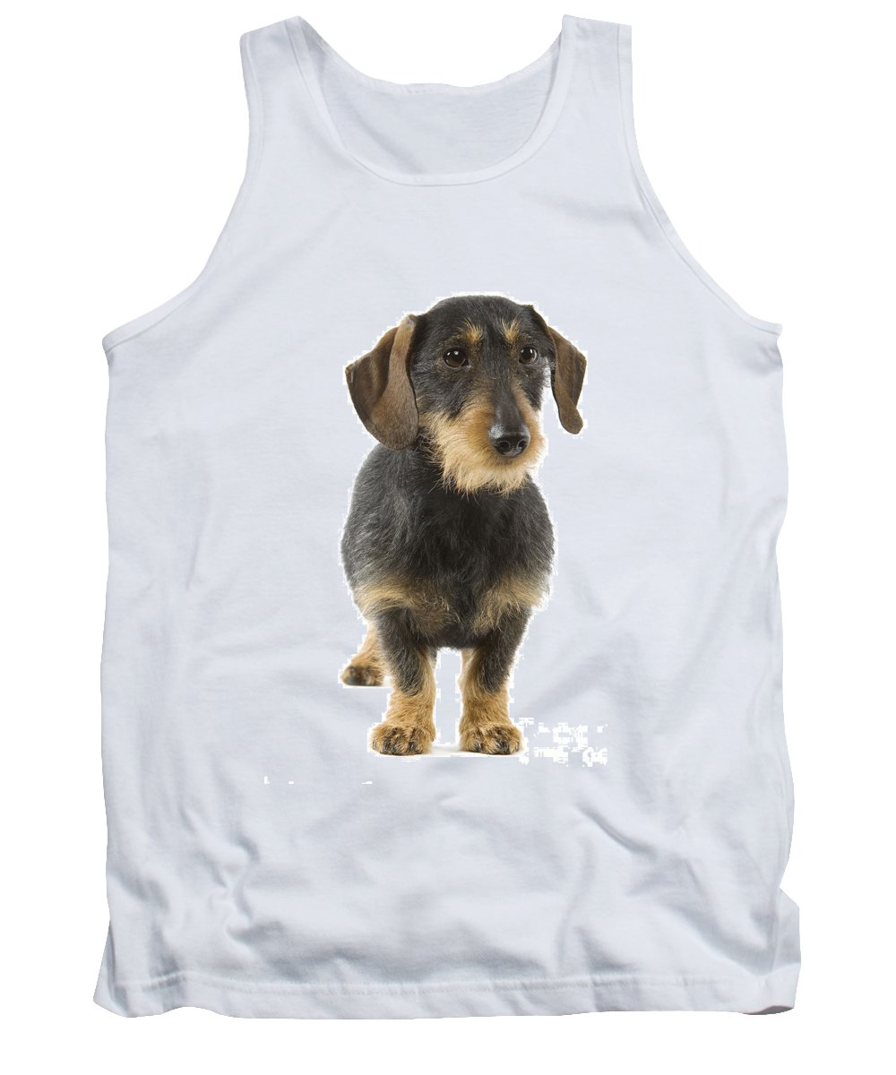 Wire-haired Dachshund Tank Top featuring the photograph Wire-haired Dachshund by Jean-Michel Labat