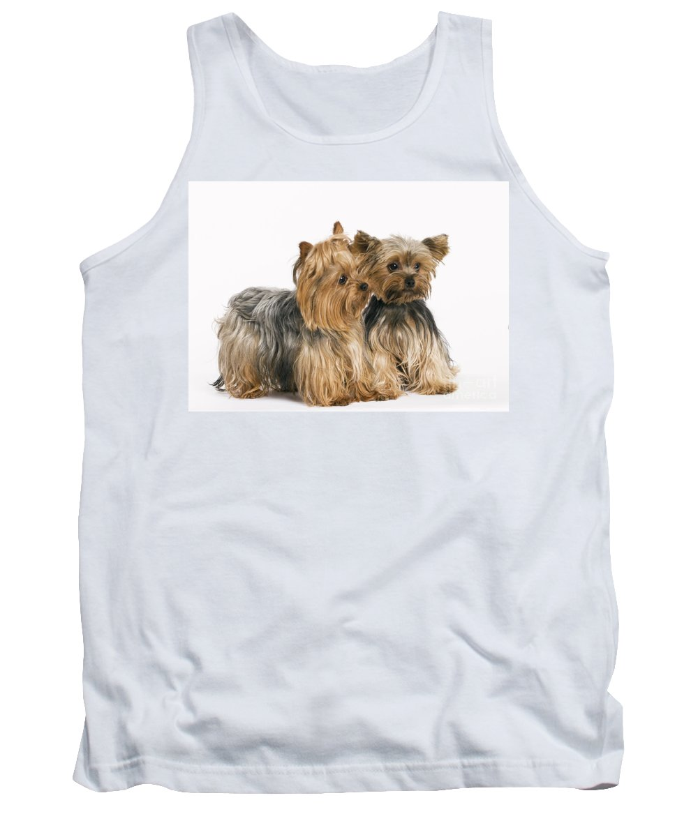 Yorkshire Terrier Tank Top featuring the photograph Yorkshire Terrier Dogs by Jean-Michel Labat