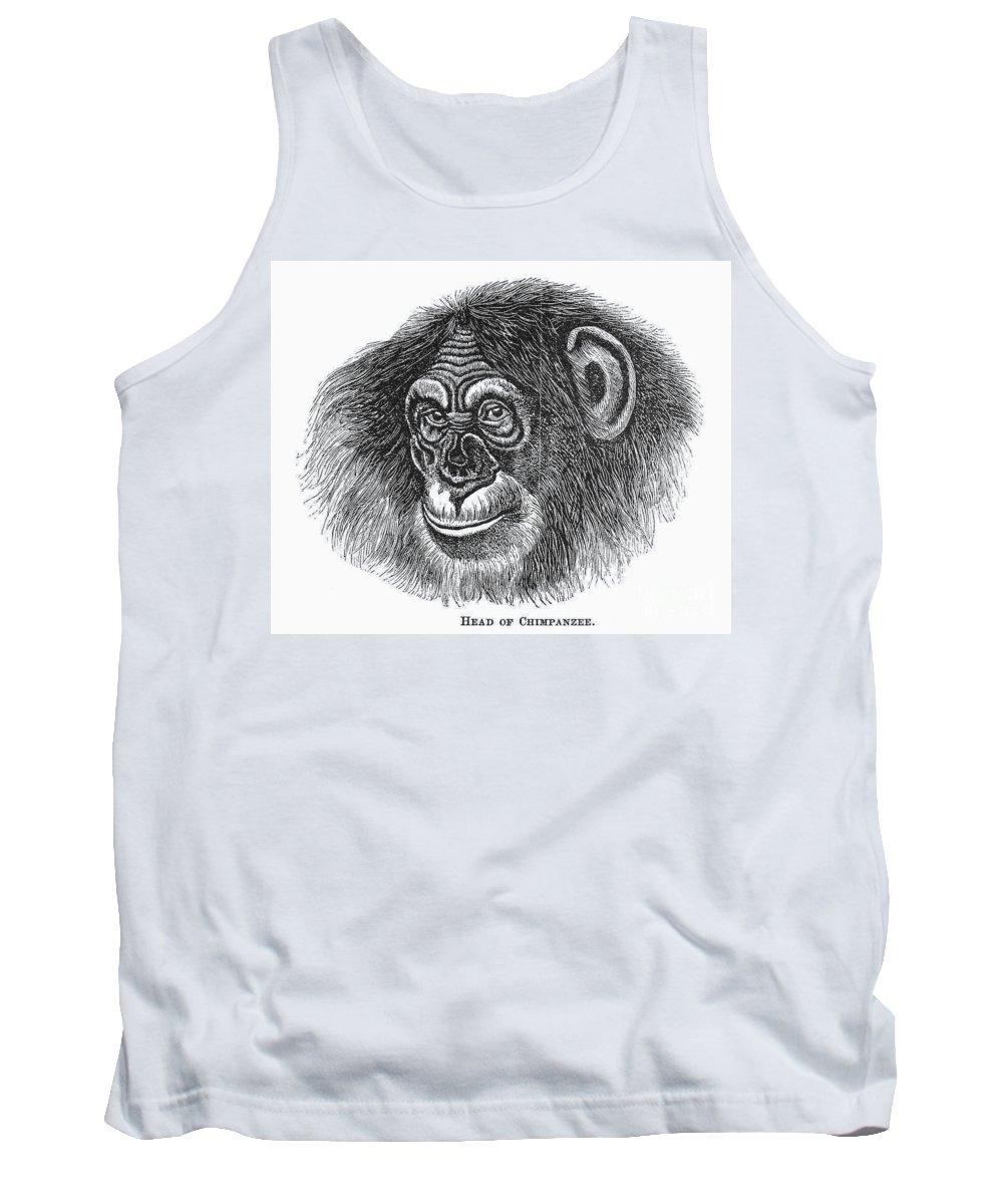 19th Century Tank Top featuring the photograph Chimpanzee by Granger