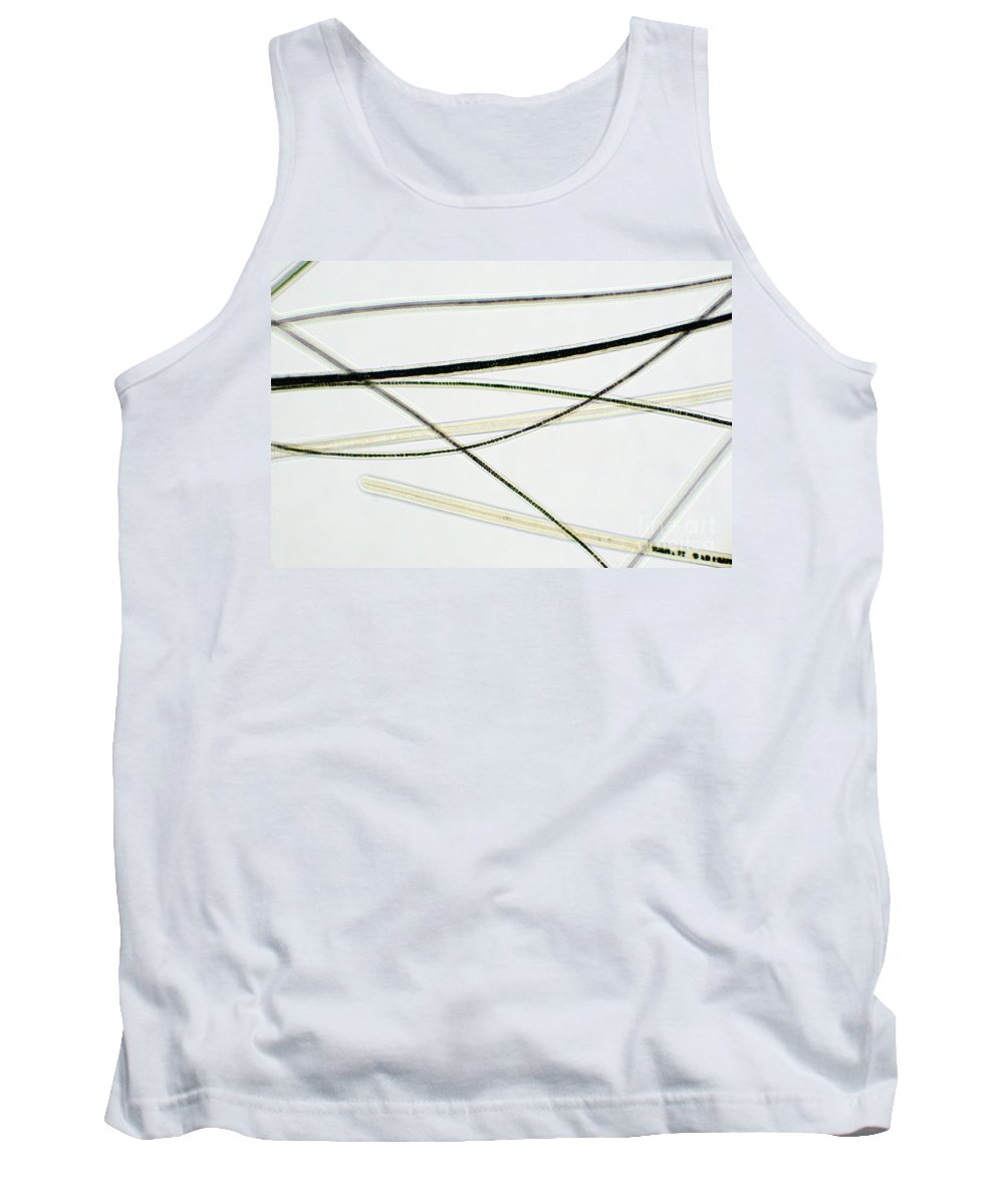 Animal Tank Top featuring the photograph Dog Hair by Ted Kinsman