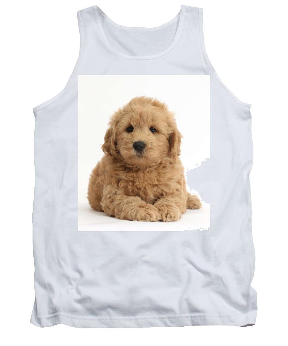 Nature Tank Top featuring the photograph Goldendoodle Puppy by Mark Taylor