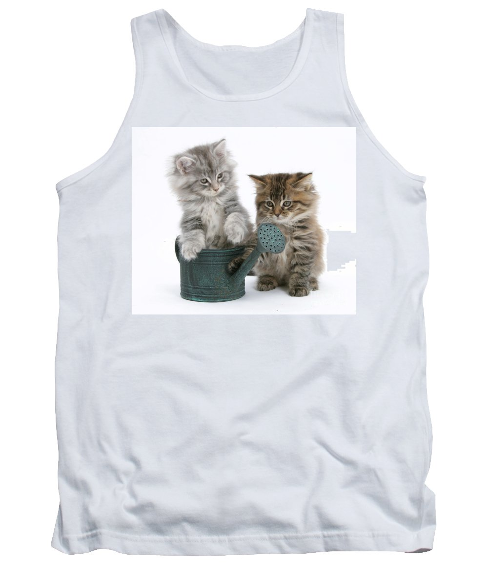 Animal Tank Top featuring the photograph Maine Coon Kitttens by Mark Taylor