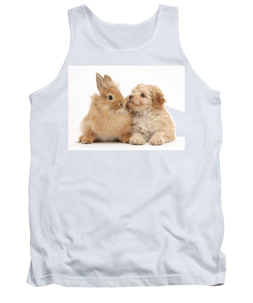 Nature Tank Top featuring the photograph Puppy And Rabbit by Mark Taylor