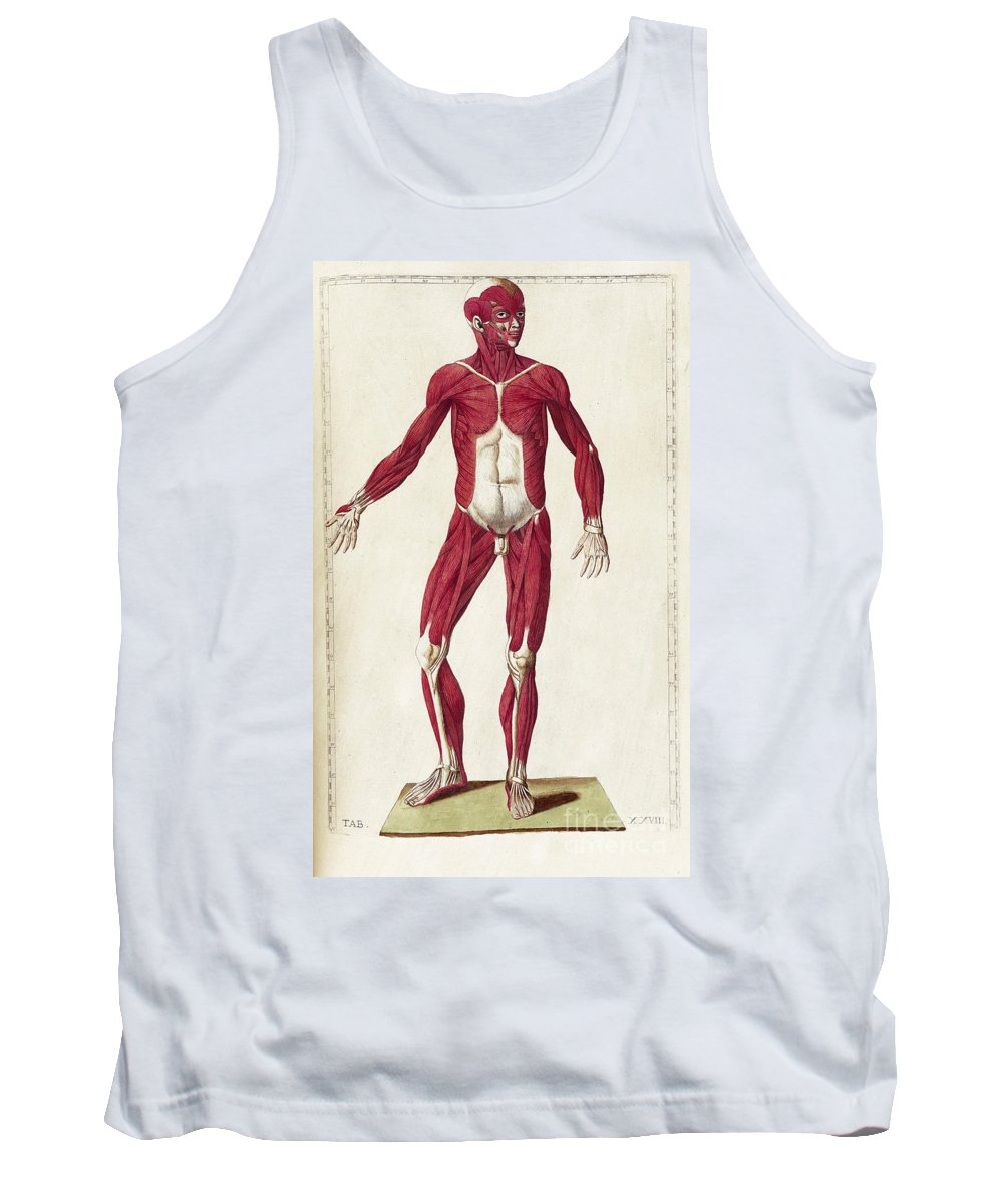 Bartholomeo Eustachi Tank Top featuring the photograph Historical Anatomical Illustration by Science Source