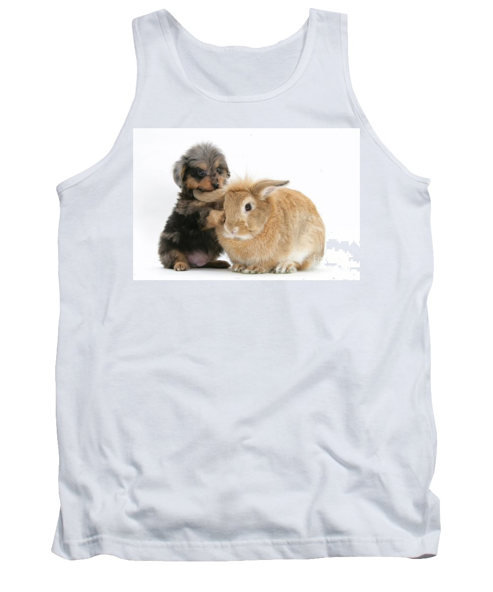 Animal Tank Top featuring the photograph Puppy And Rabbit by Mark Taylor