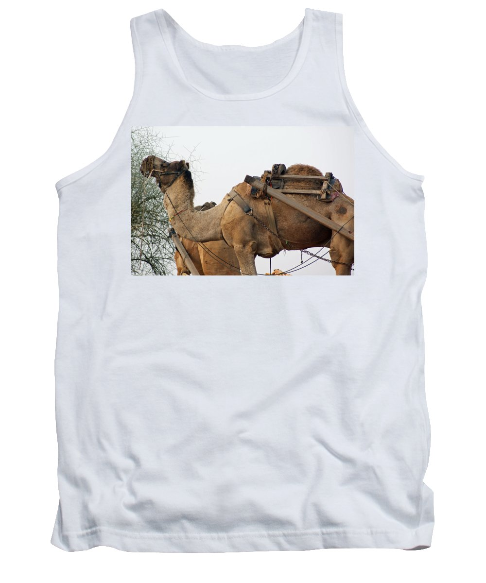 Camel Tank Top featuring the photograph A Camel Foraging For Food In A Desert Environment by Ashish Agarwal