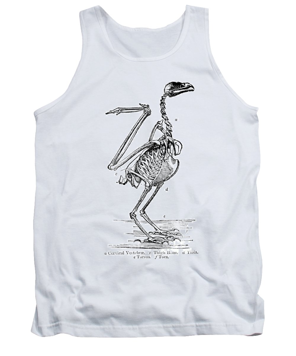 19th Century Tank Top featuring the photograph Bird Skeleton by Granger