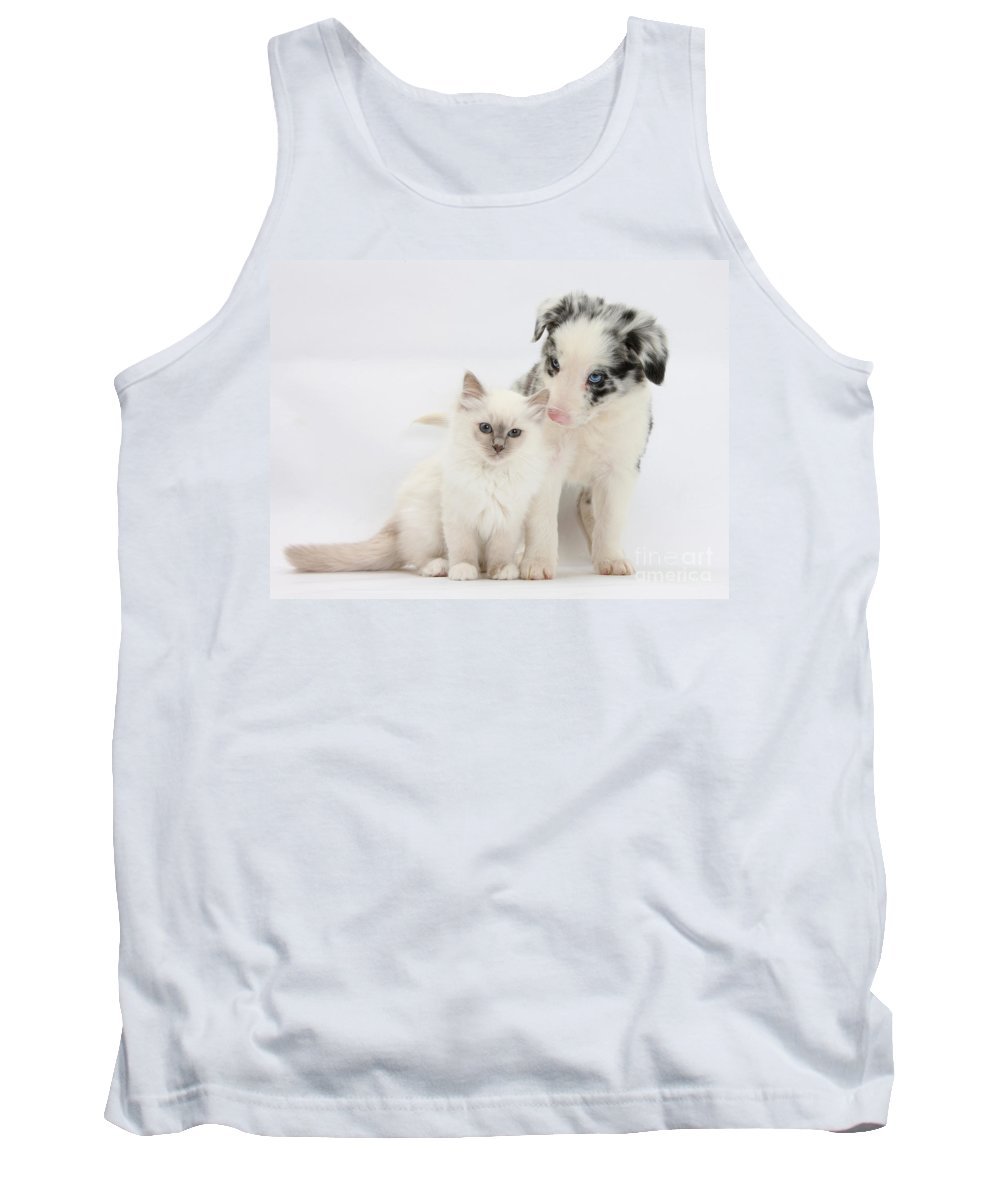Animal Tank Top featuring the photograph Blue-point Kitten And Border Collie by Mark Taylor