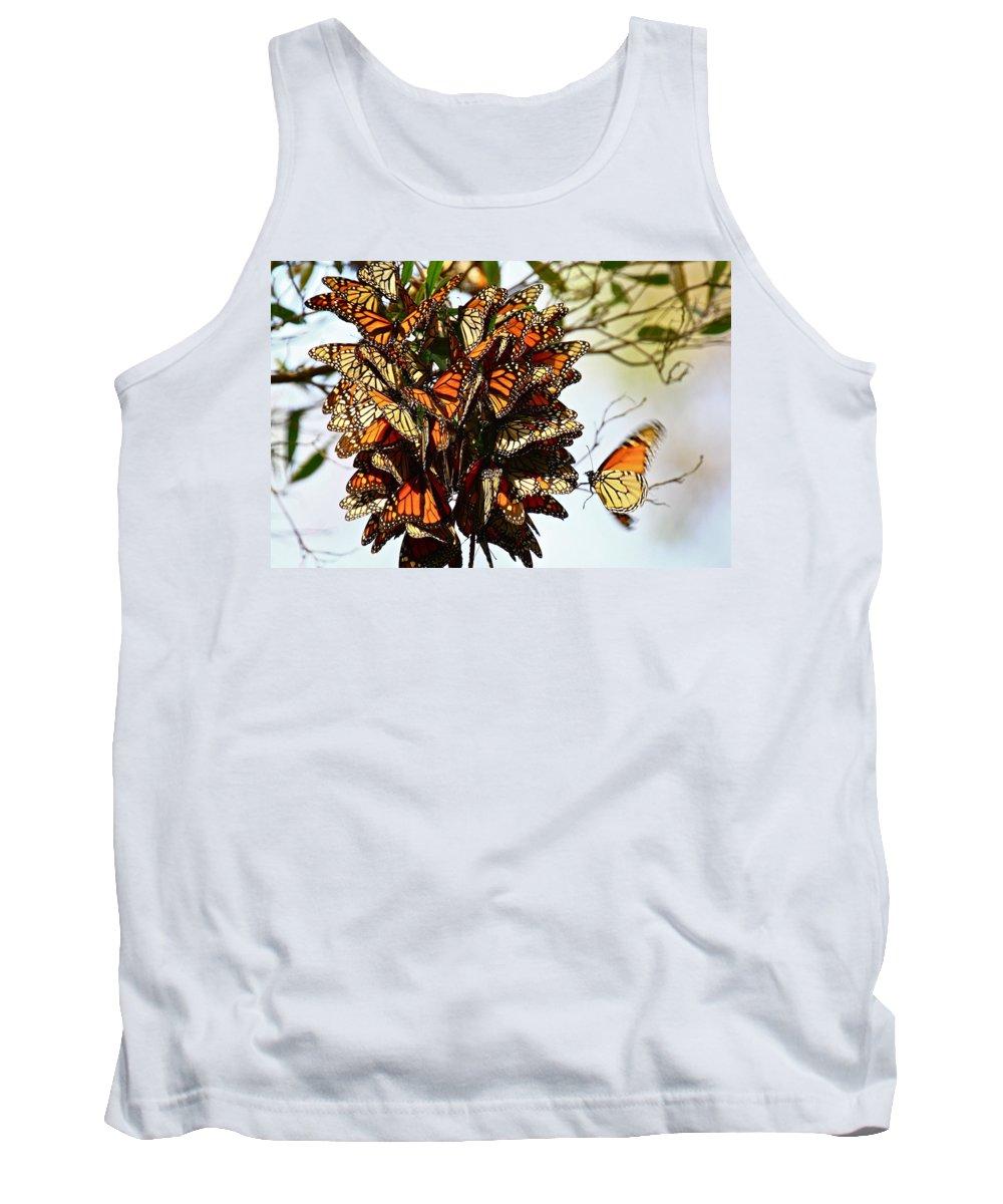 Butterflies Tank Top featuring the photograph Bouquet Of Butterflies by Diana Hatcher