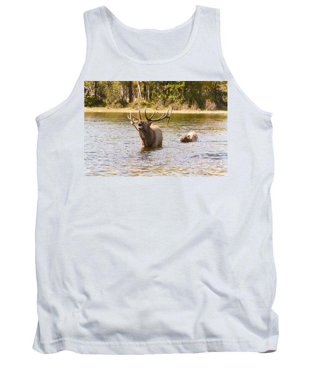 Elk Tank Top featuring the photograph Bugling Bull Elk And Calf Colorado Rut 4 by James BO Insogna