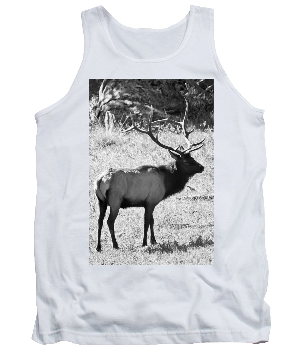 Elk Tank Top featuring the photograph Bull Elk by Colleen Coccia
