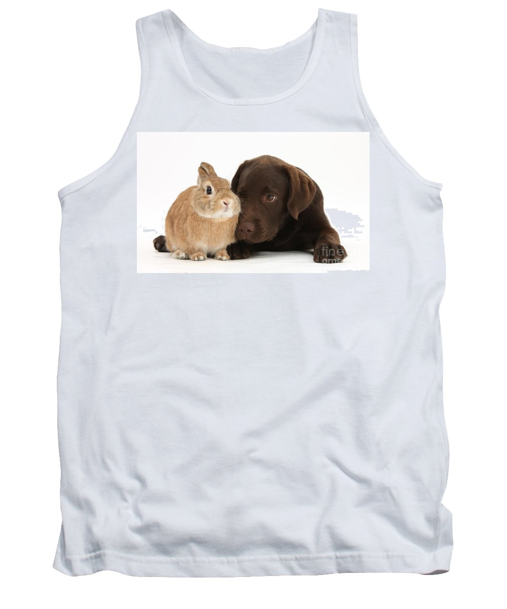 Nature Tank Top featuring the photograph Chocolate Labrador Pup by Mark Taylor