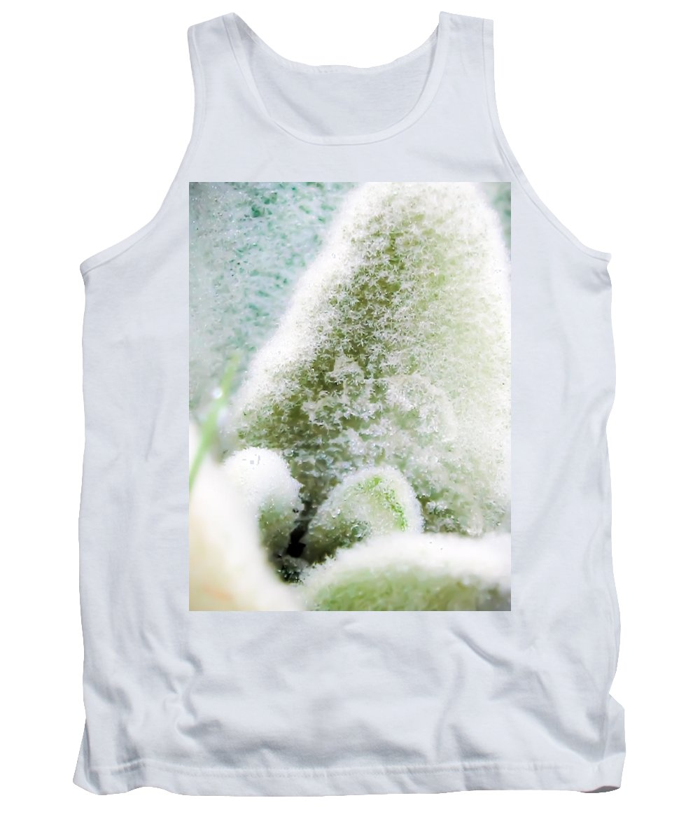 Lamb's Ear Tank Top featuring the photograph Crystal Palace by Sarah Wiggins