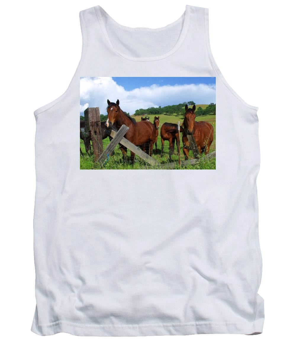 Herd Horses Summer Day Pasture Tank Top featuring the photograph Curious Horses In Summer by Cherokee Blue