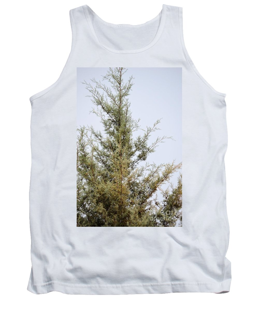 Cypress Tank Top featuring the photograph Cypress by Maria Urso