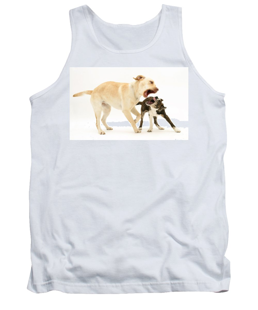 Animal Tank Top featuring the photograph Dogs Playing by Mark Taylor