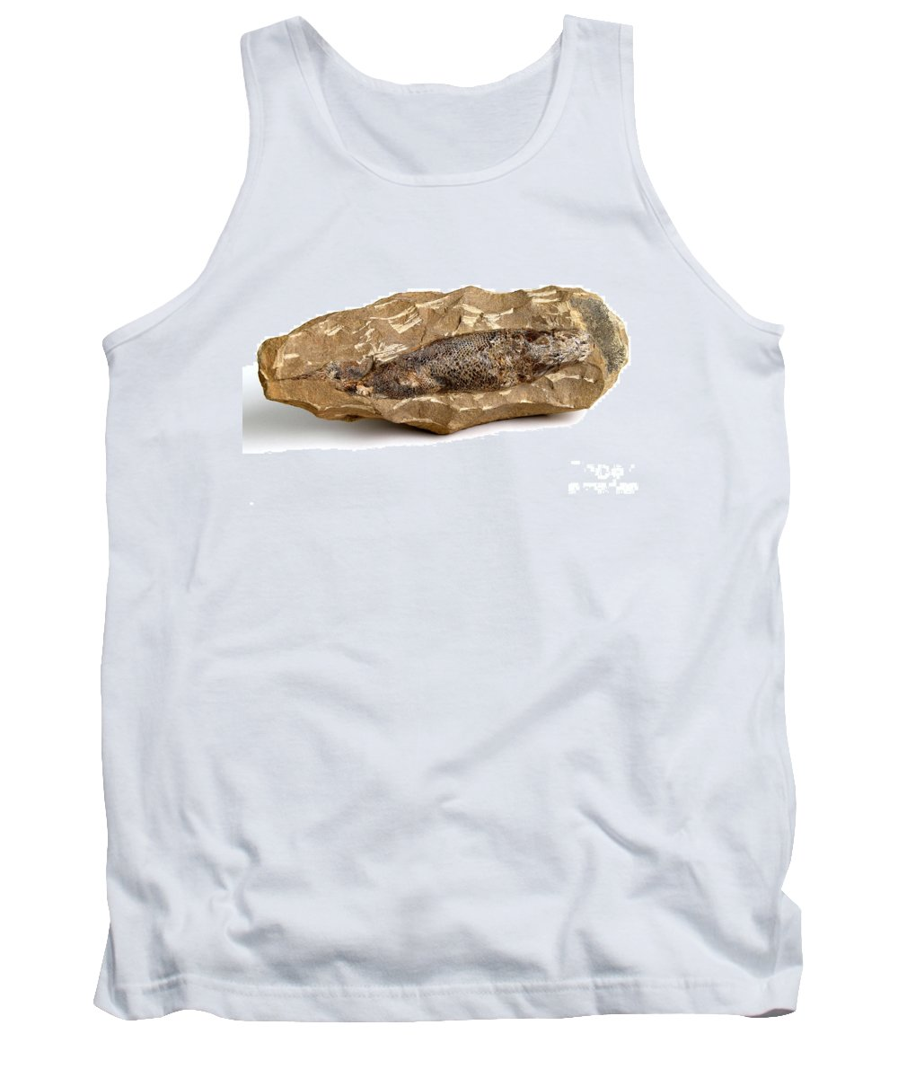Nature Tank Top featuring the photograph Fossilized Fish by Photo Researchers