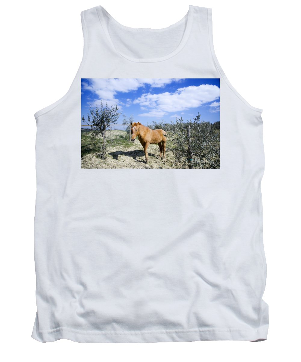 Horse Tank Top featuring the photograph Horse by Mats Silvan