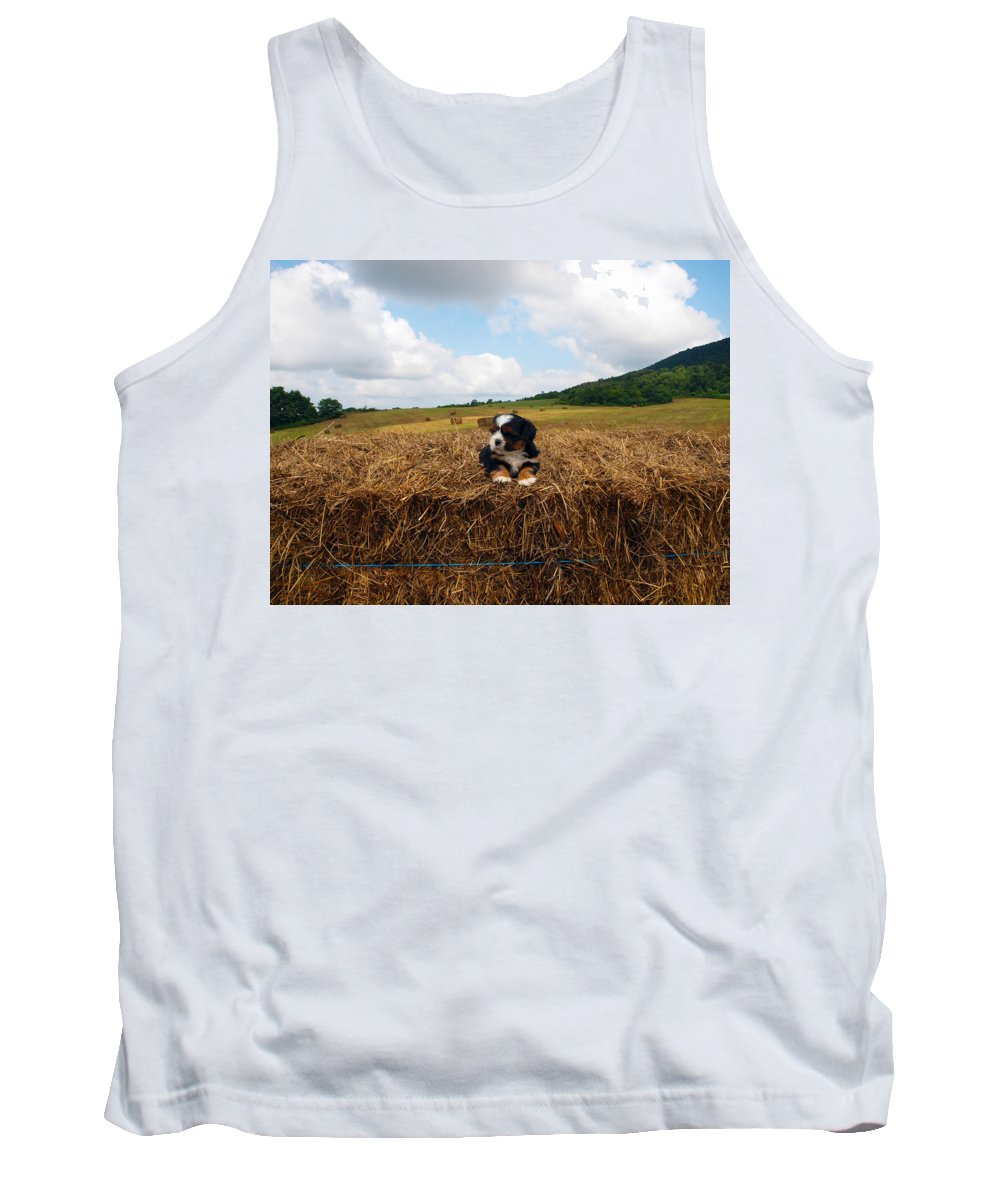 Farm Animals Tank Top featuring the photograph King Of The Hay by Robert Margetts
