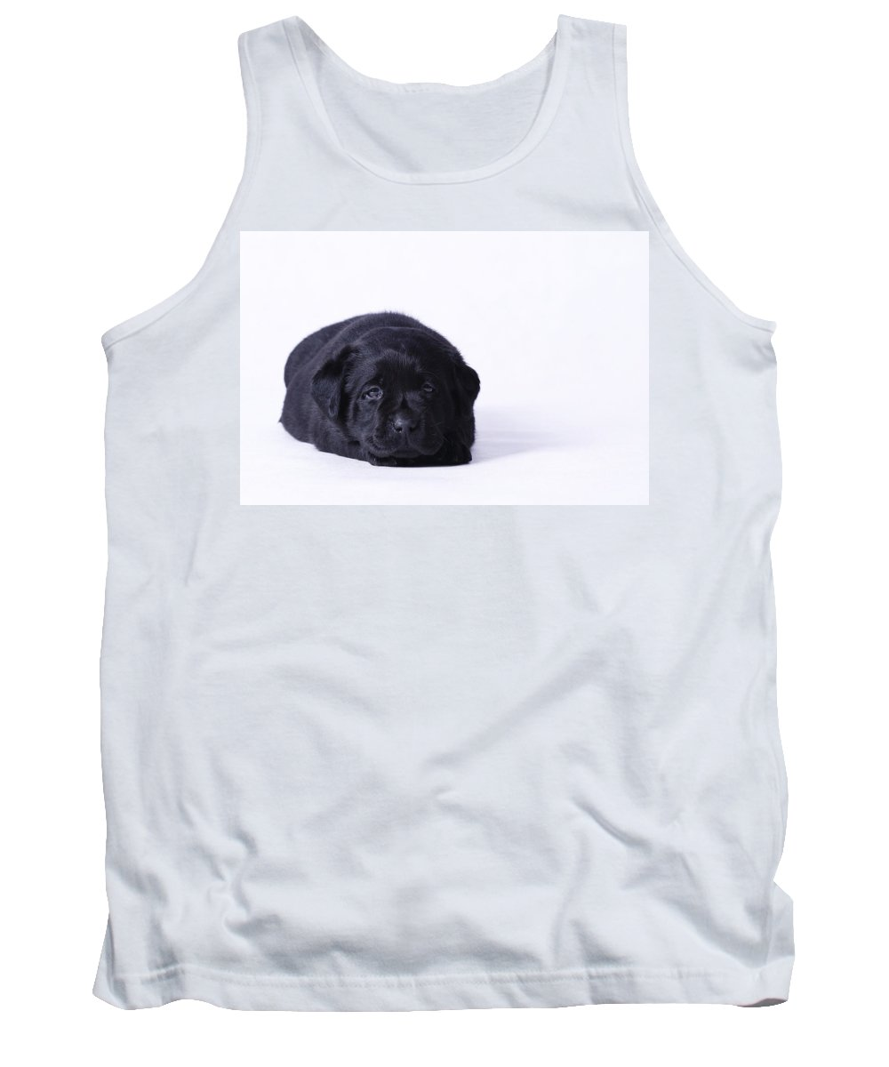 Animal Tank Top featuring the photograph Lab Puppy by Waldek Dabrowski