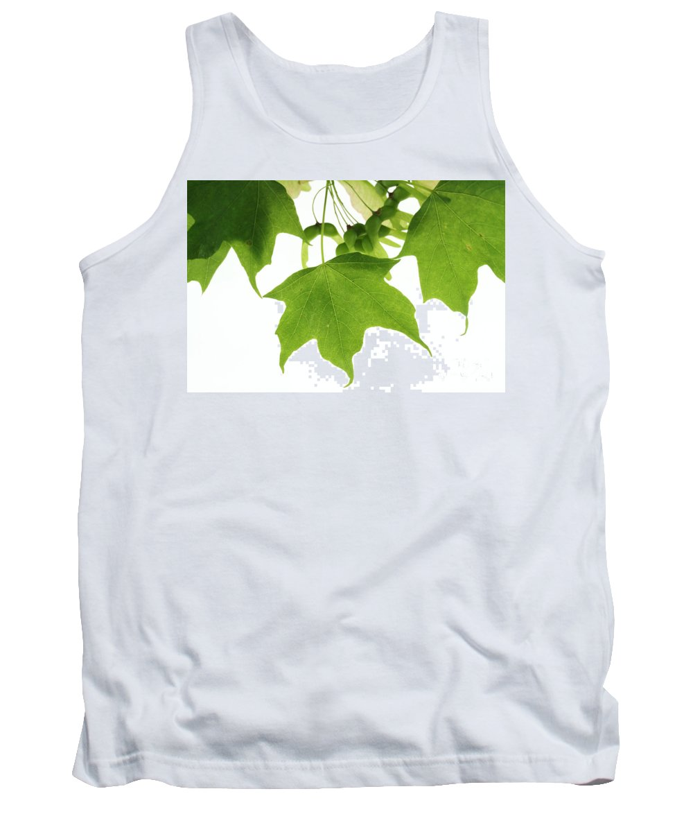 Nature Tank Top featuring the photograph Maple Leaves And Seeds by Photo Researchers