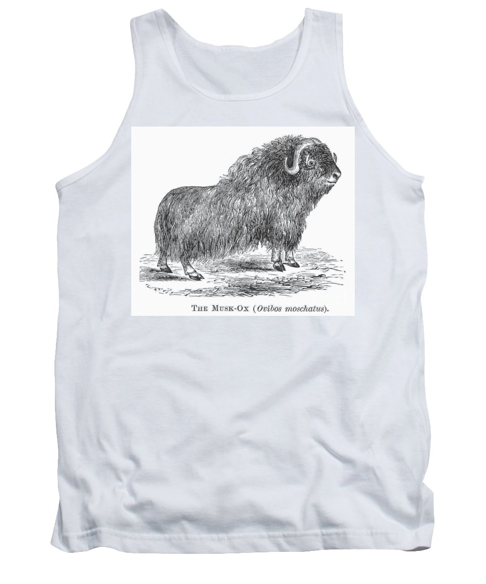 19th Century Tank Top featuring the photograph Musk Ox by Granger