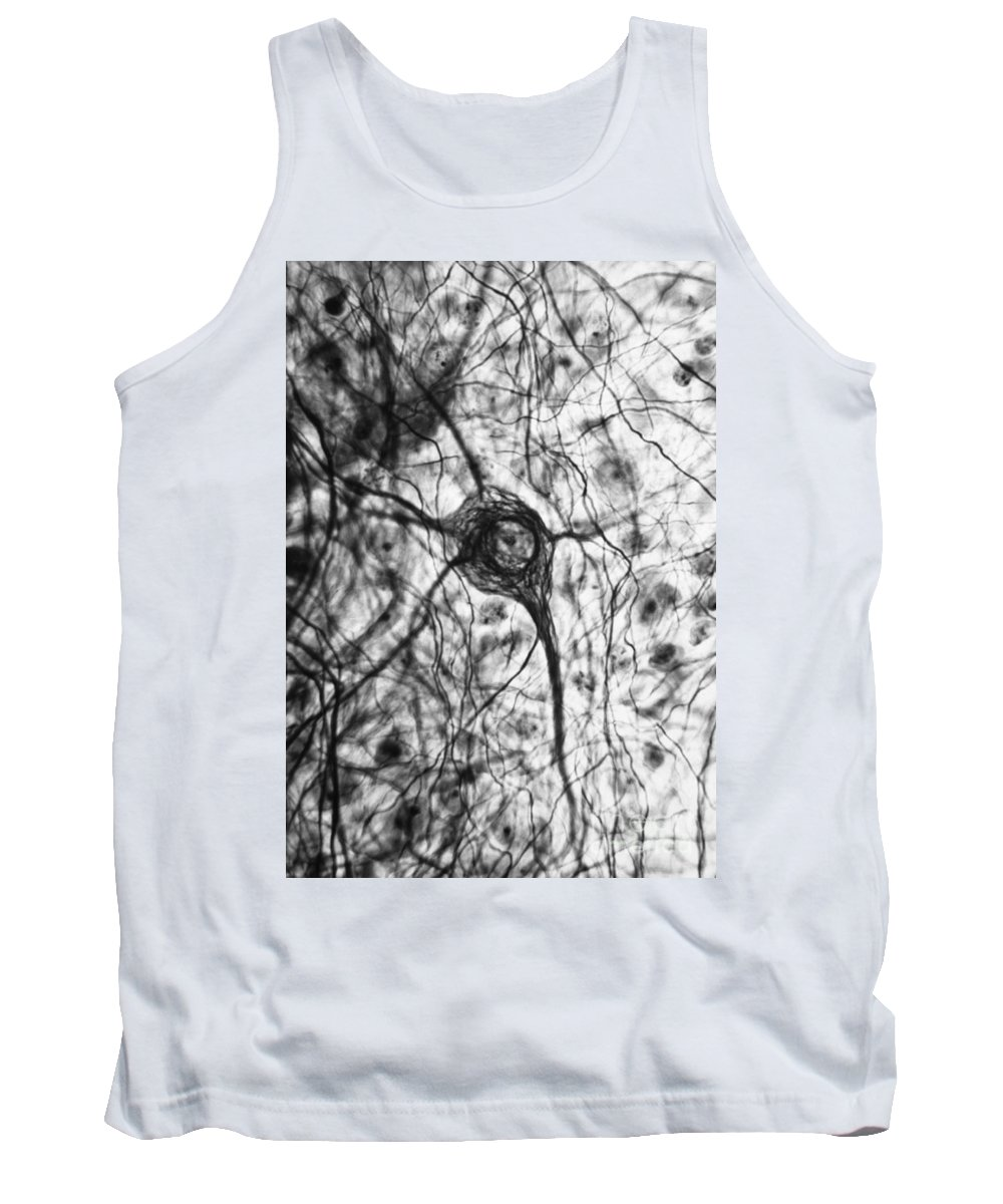 Cell Tank Top featuring the photograph Neuron, Tem by Omikron