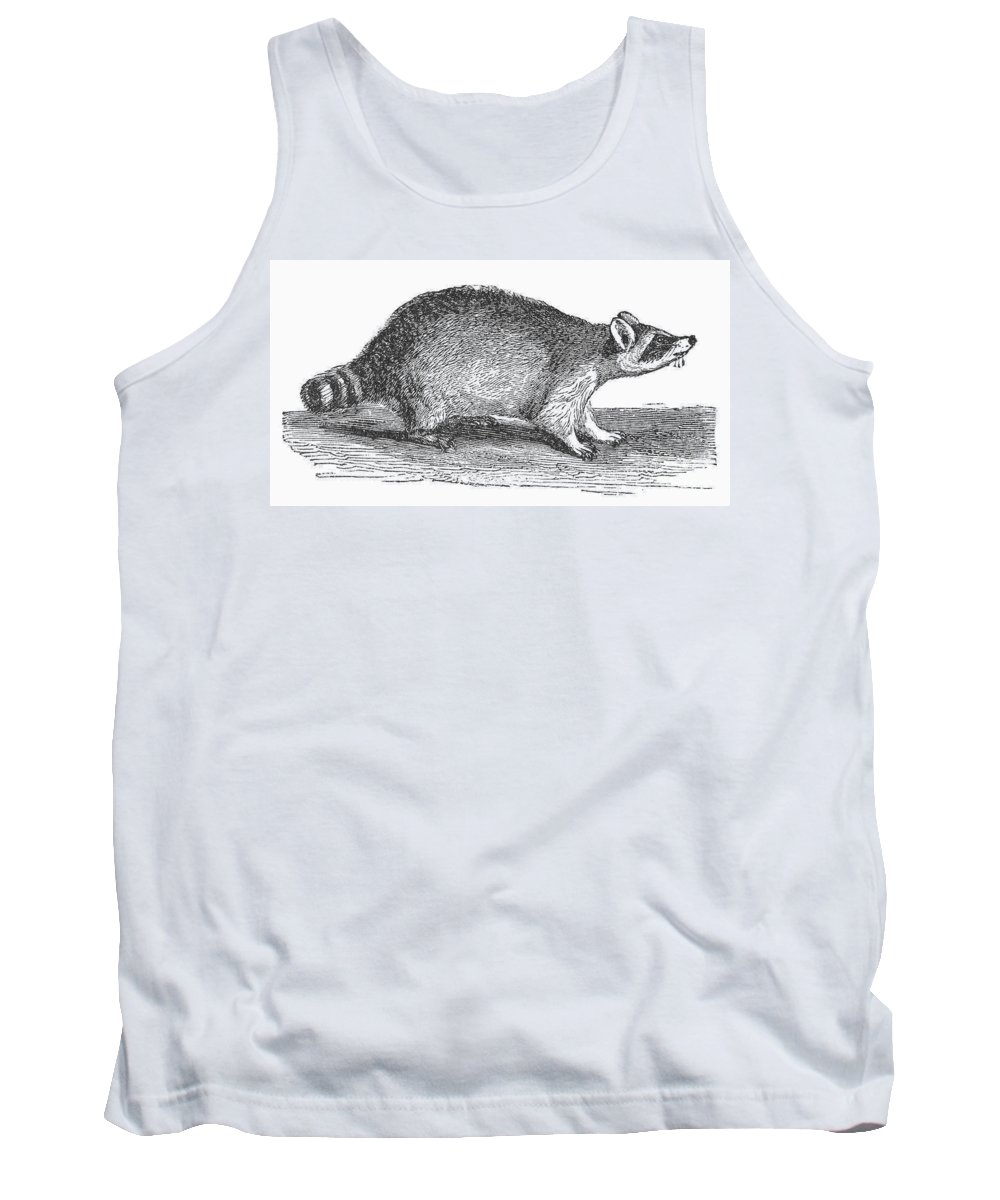 19th Century Tank Top featuring the photograph Raccoon by Granger