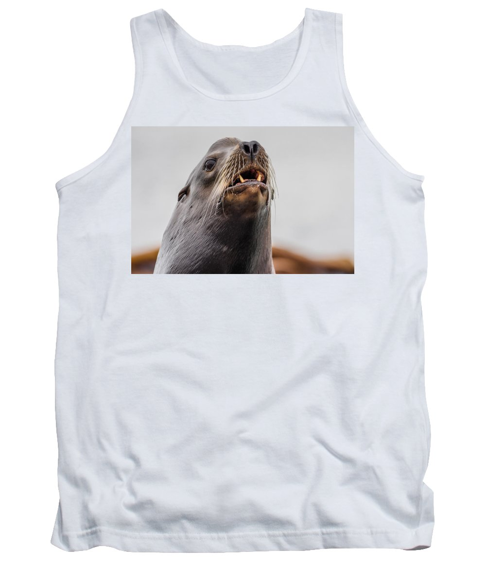 Sea Lion Tank Top featuring the photograph Sea Lion And Yellow Fangs by Greg Nyquist