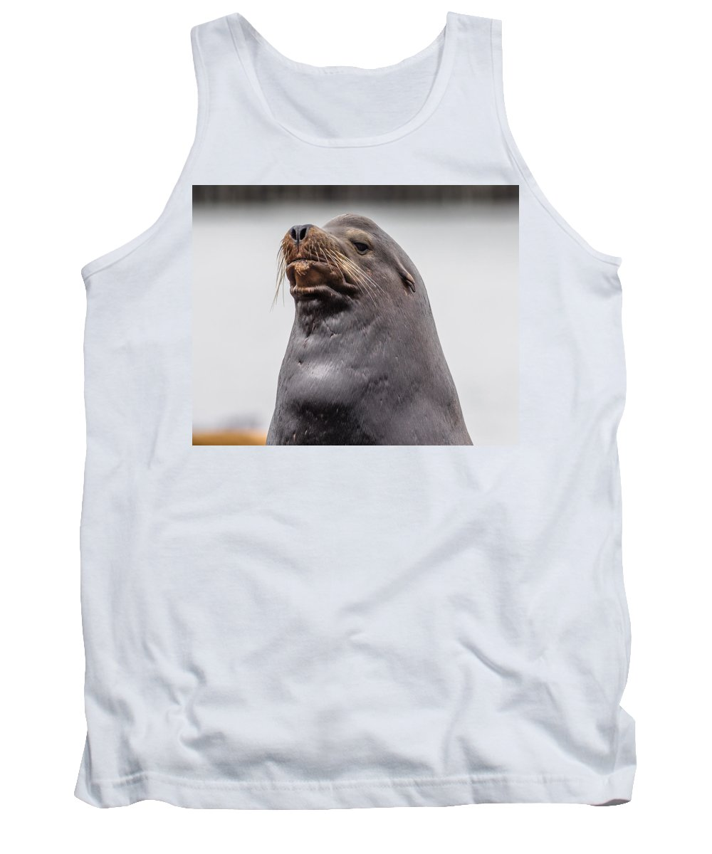 Sea Lion Tank Top featuring the photograph Sea Lion Satisfaction by Greg Nyquist