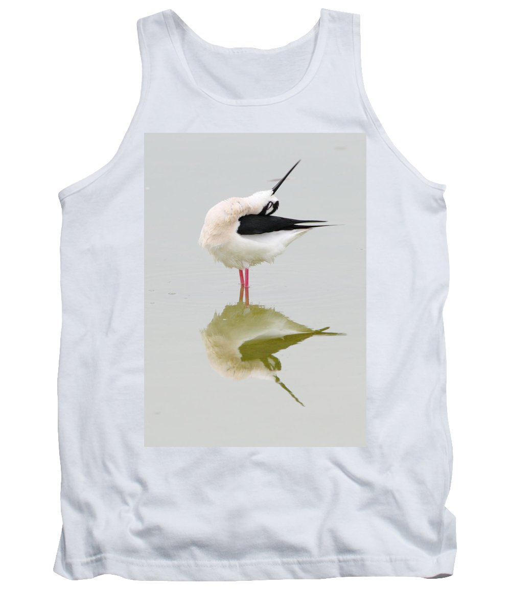 Black-necked Stilt Tank Top featuring the photograph Stretch by Andrew McInnes