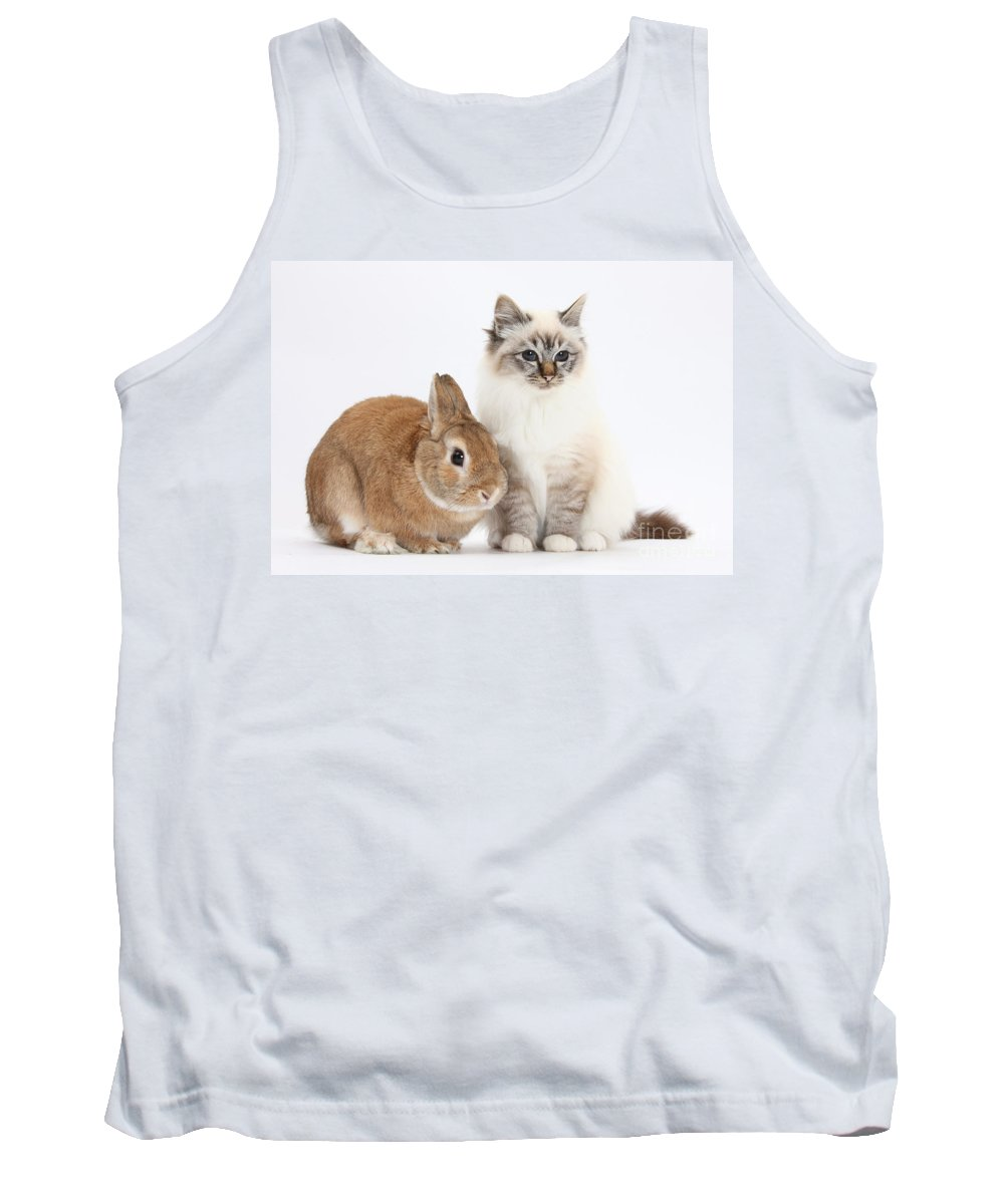 Nature Tank Top featuring the photograph Tabby-point Birman Cat And Rabbit by Mark Taylor