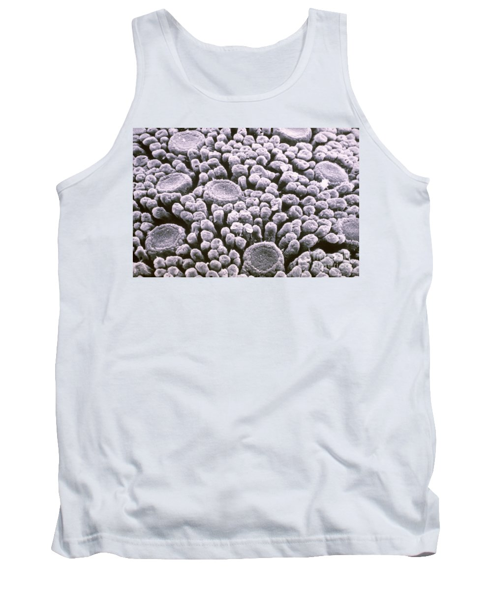 Tongue Tank Top featuring the photograph Tastebuds by Omikron
