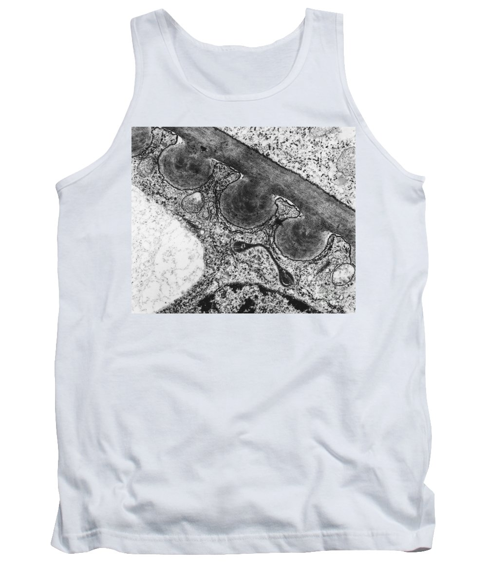Science Tank Top featuring the photograph Tomato Chloroplast Tem by Omikron