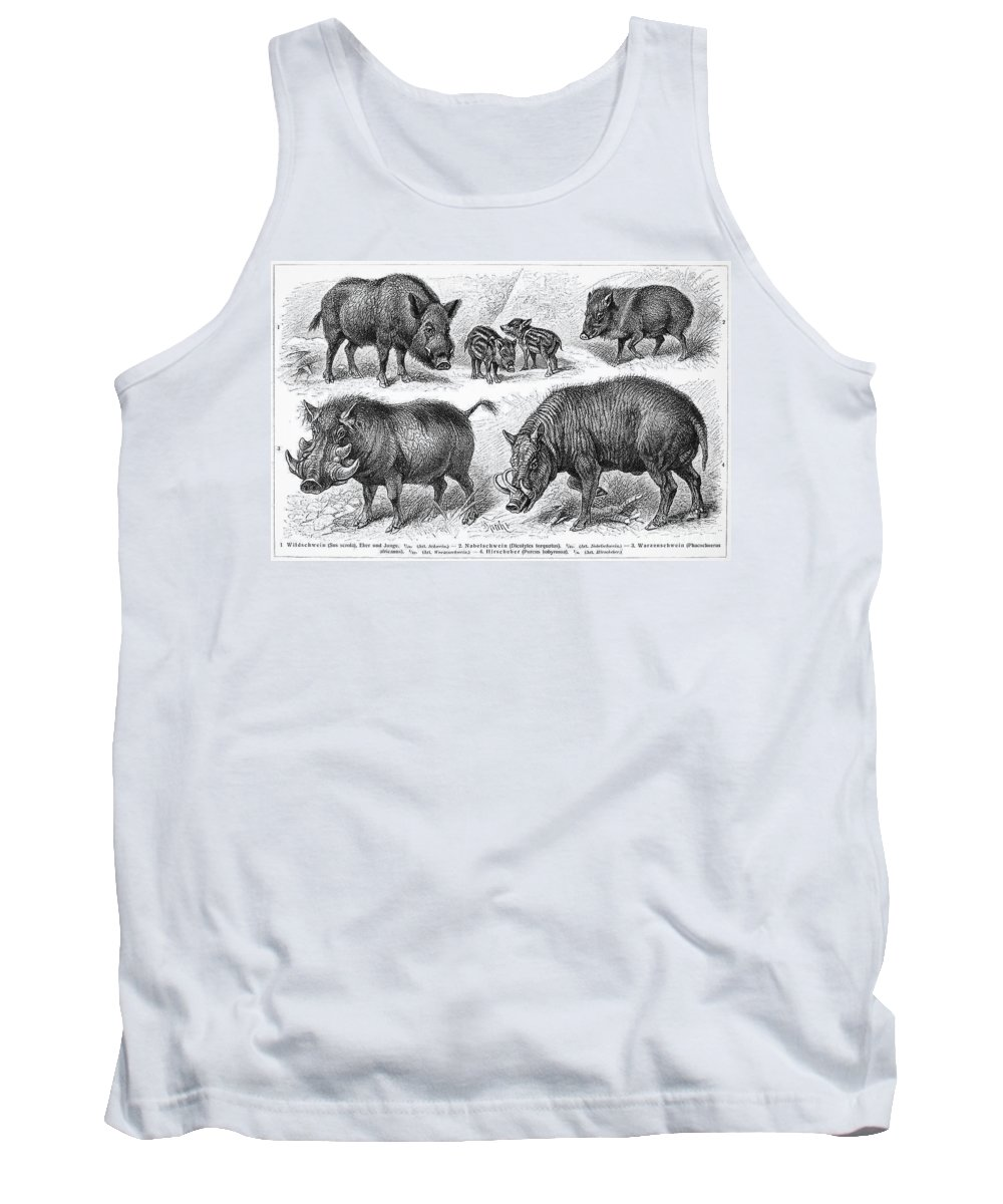 19th Century Tank Top featuring the photograph Varieties Of Swine by Granger