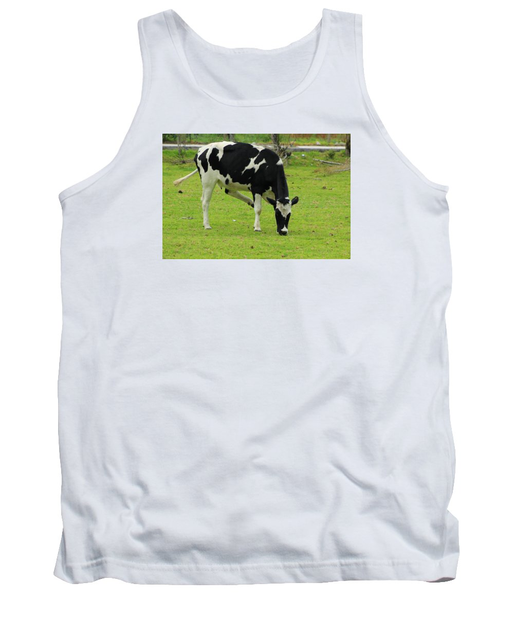 Cow Tank Top featuring the photograph Holstein Cow On A Farm by Robert Hamm