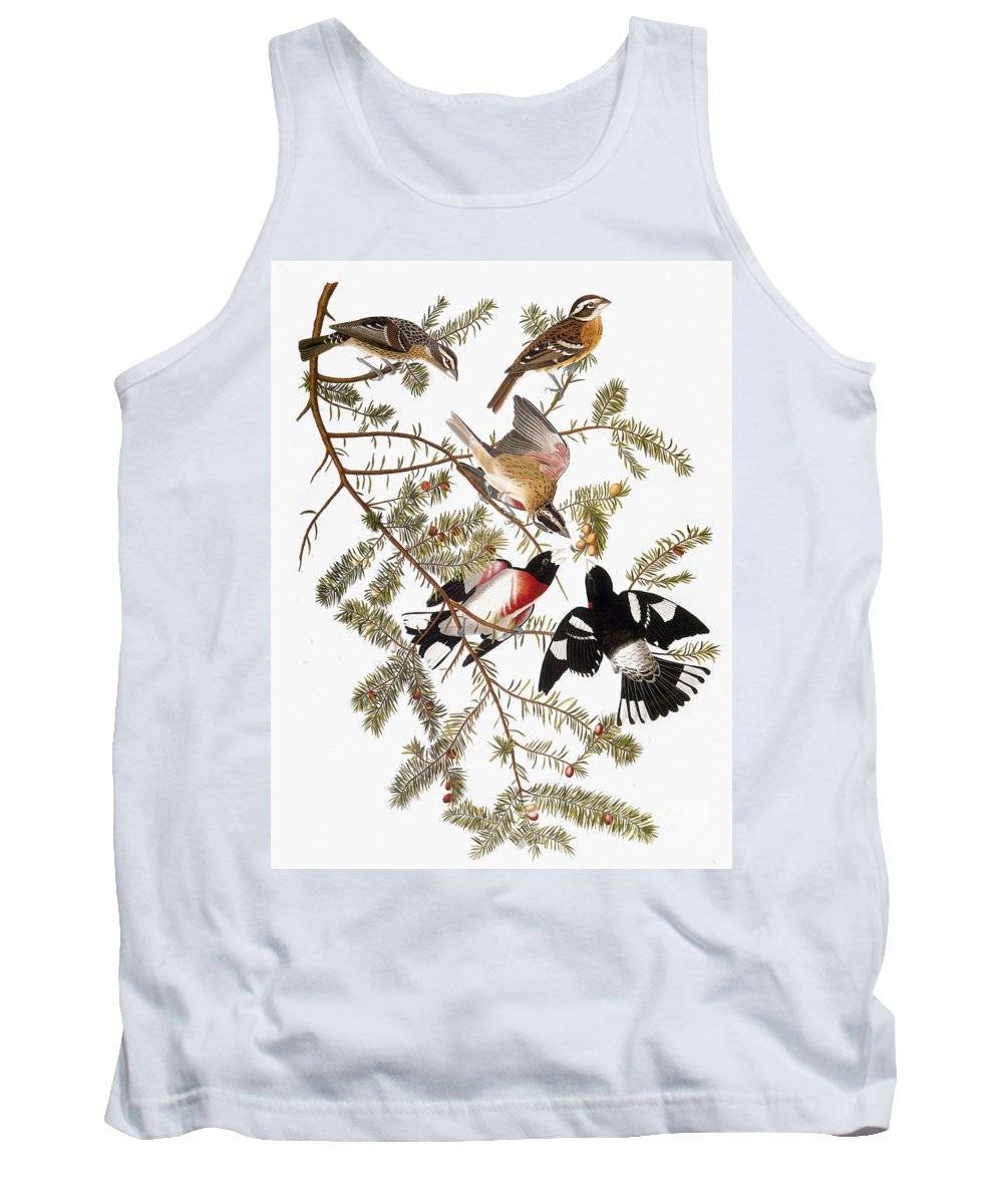 1838 Tank Top featuring the photograph Audubon: Grosbeak by Granger