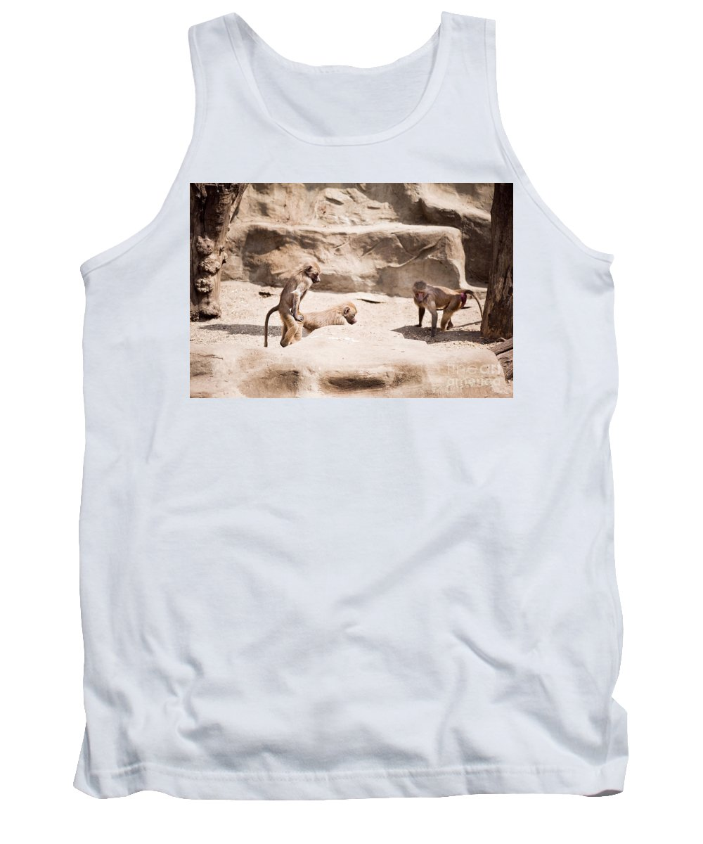 Baboons Tank Top featuring the photograph Baboons Monkeys Having Sex by Arletta Cwalina