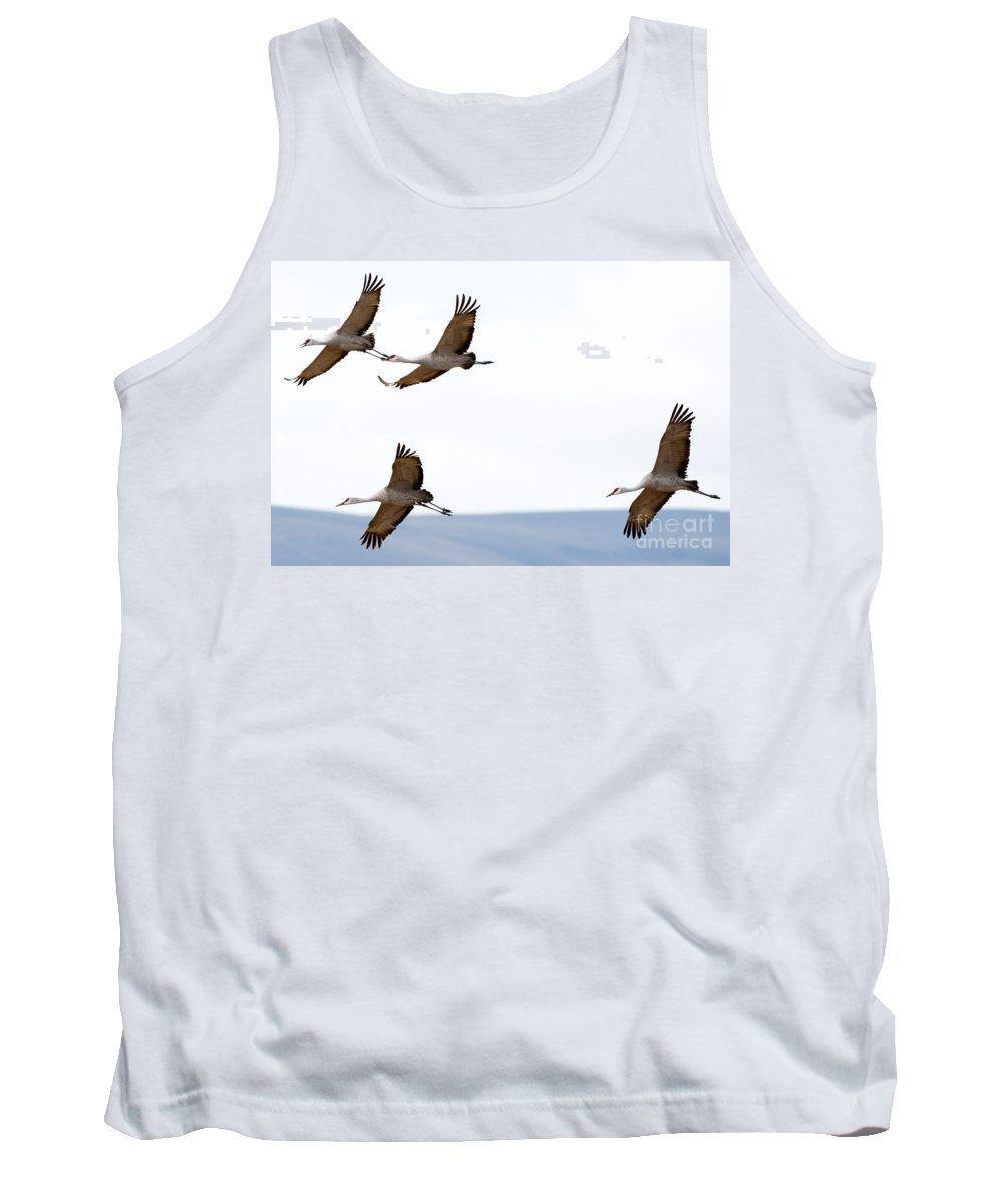 Sandhill Cranes Tank Top featuring the photograph Bank Right by Mike Dawson