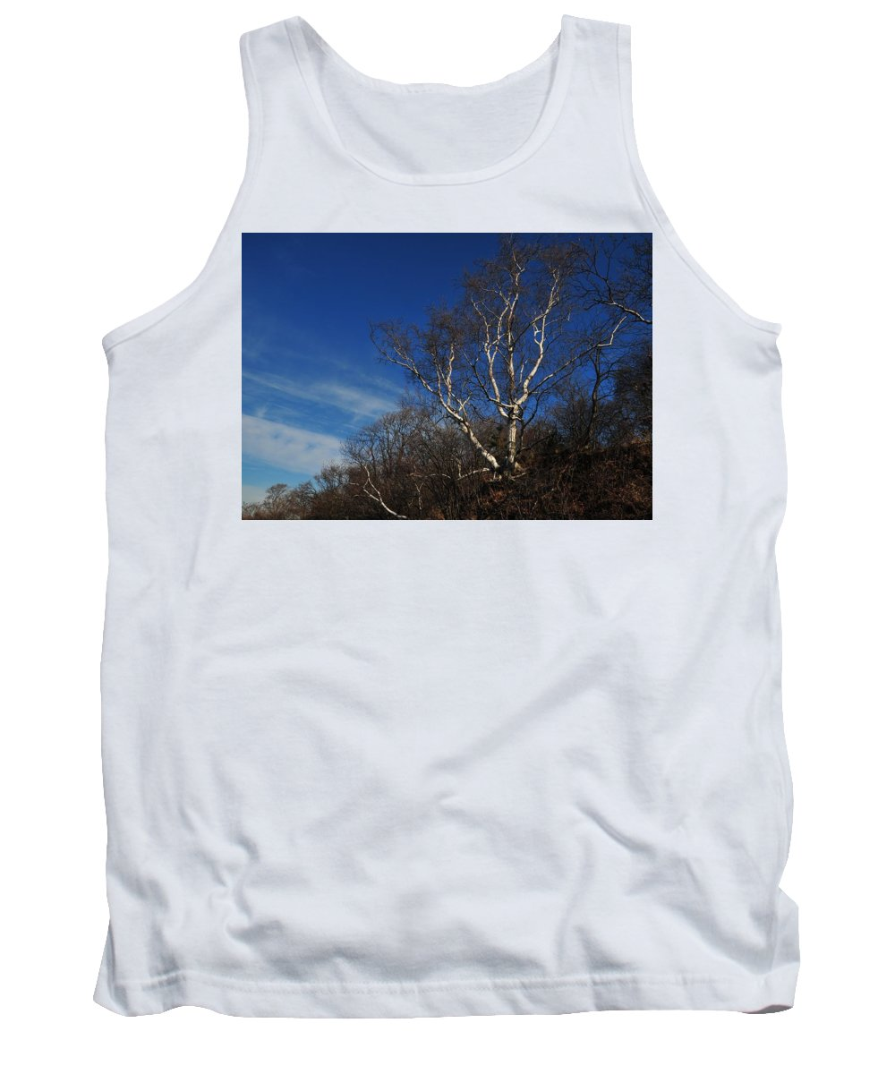 Birch On A Cliff Squaw Rock Quincy Ma Tank Top featuring the photograph Birch On A Cliff by Bill Driscoll