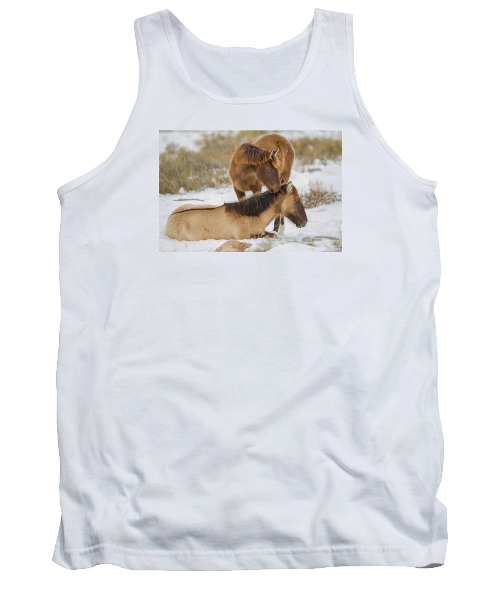 Wild Horse Tank Top featuring the photograph Brothers by Kent Keller