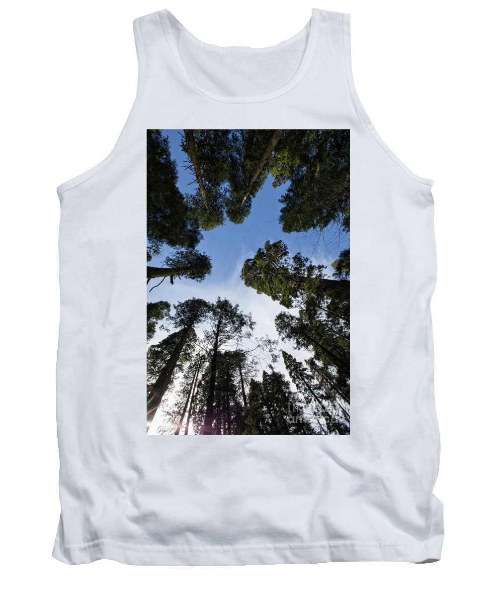Big Trees Tank Top featuring the photograph Circle Of Trees by Sylvia Sanchez