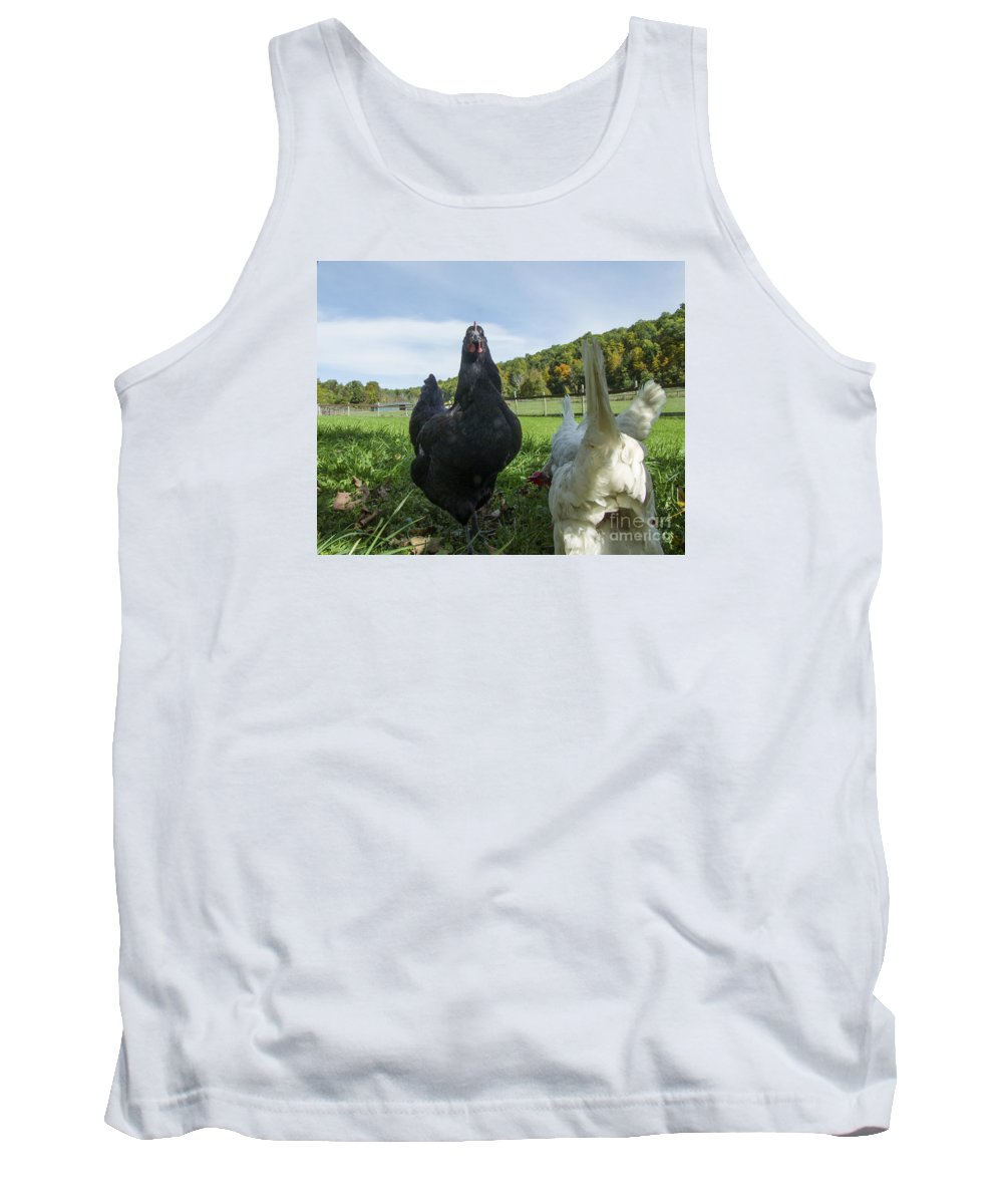 Phil Welsher Tank Top featuring the photograph Curious Chicken by Phil Welsher