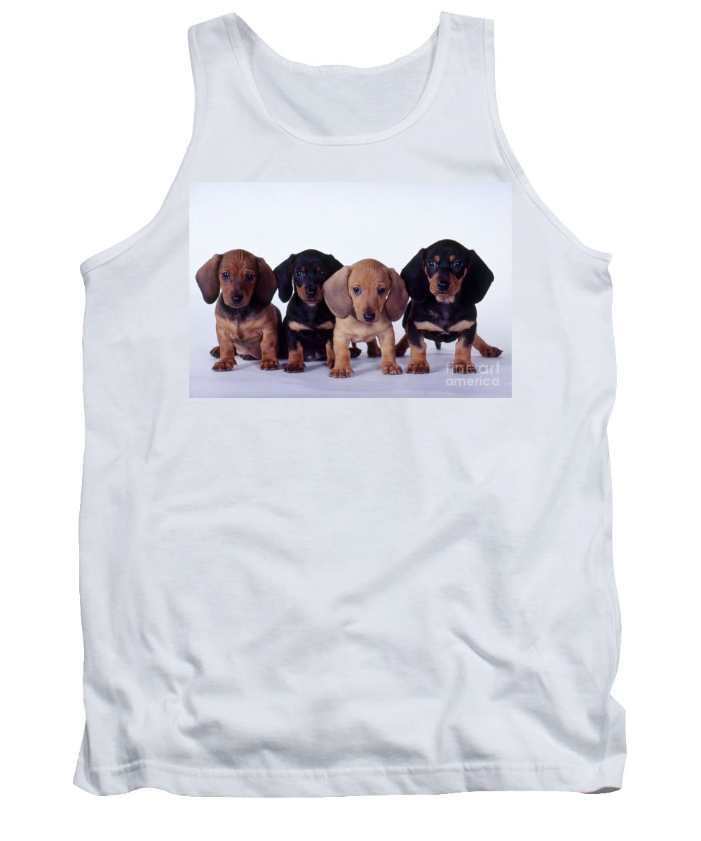 Fauna Tank Top featuring the photograph Dachshund Puppies by Carolyn McKeone and Photo Researchers