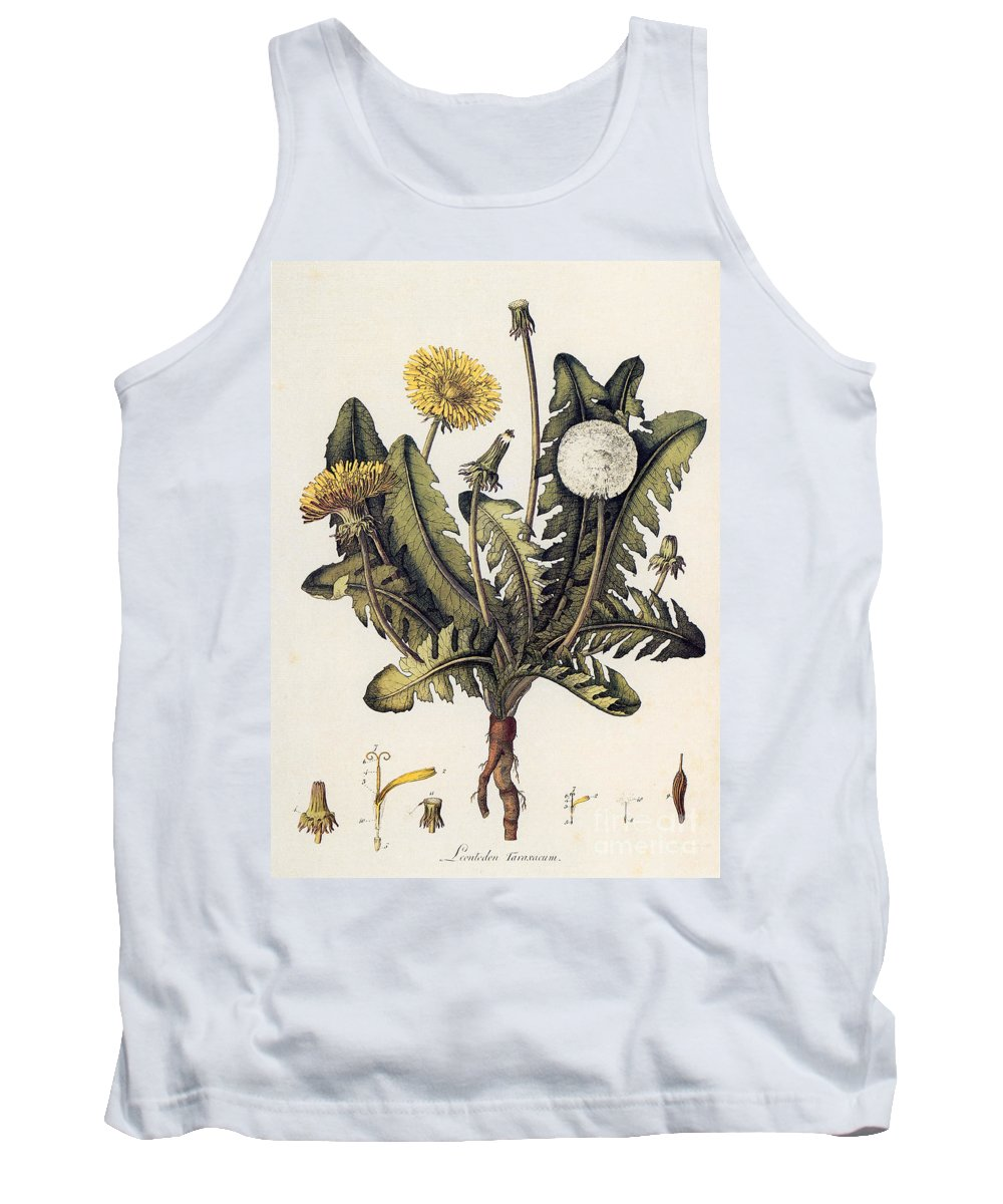 18th Century Tank Top featuring the photograph Dandelion by Granger