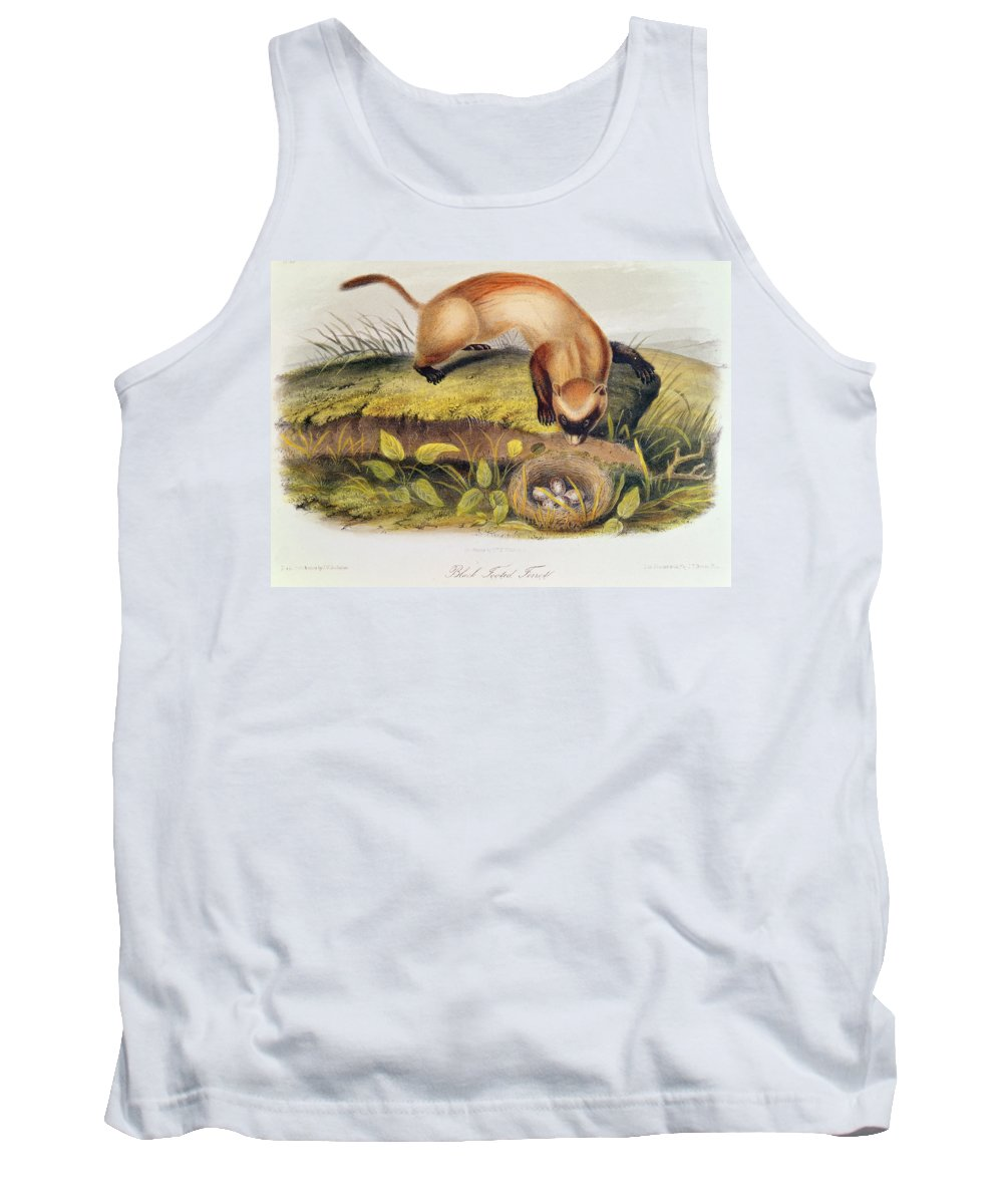 Black-footed Ferret From Quadrupeds Of North America (1842-5) By John James Audubon (1785-1851) Tank Top featuring the painting Ferret by John James Audubon